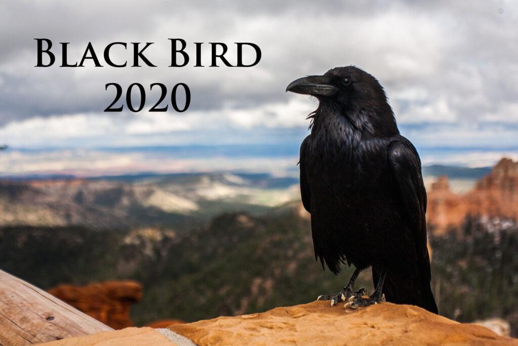 STAHL - Black Bird